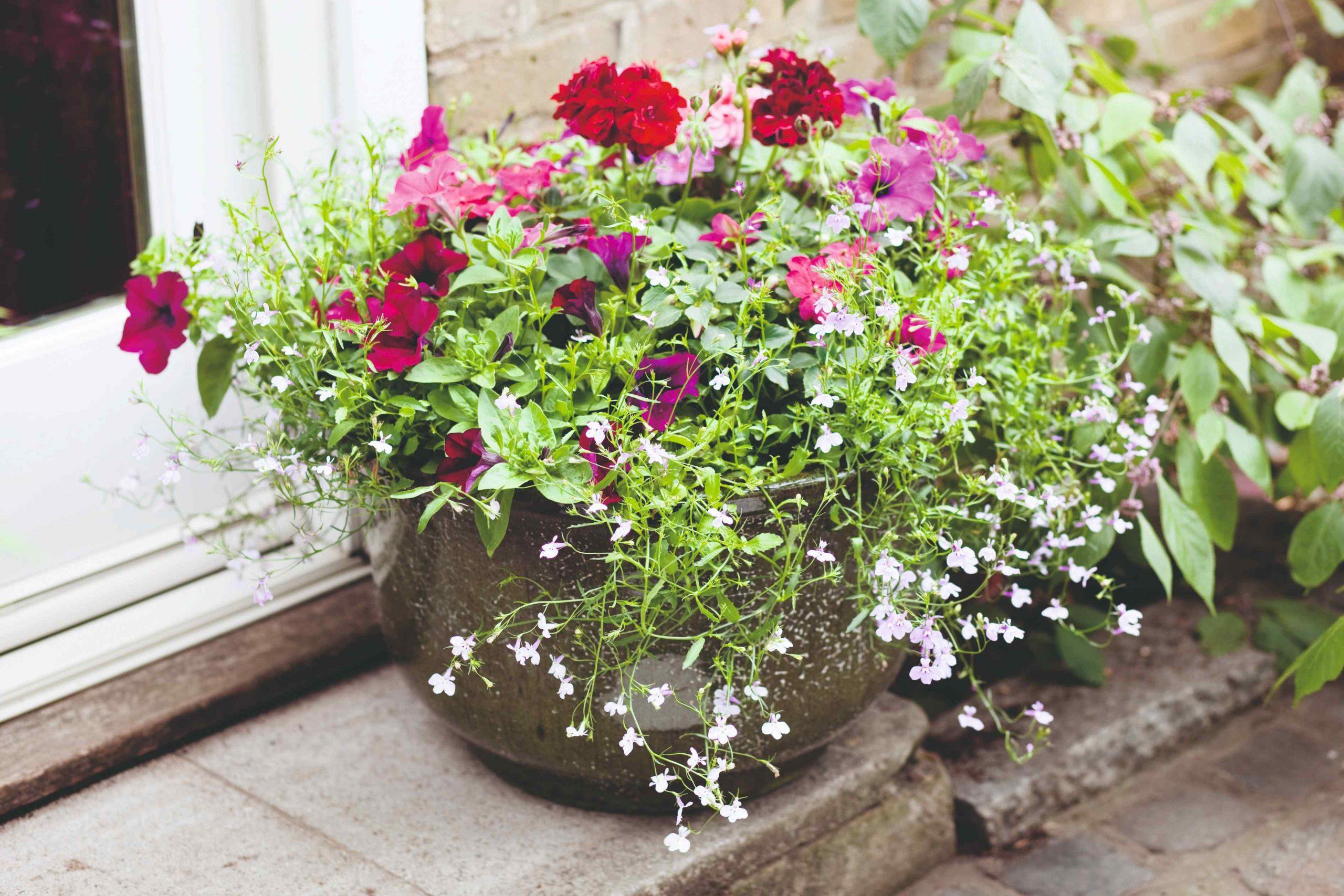 Kvetináč s petúniami a bielymi kvietkami