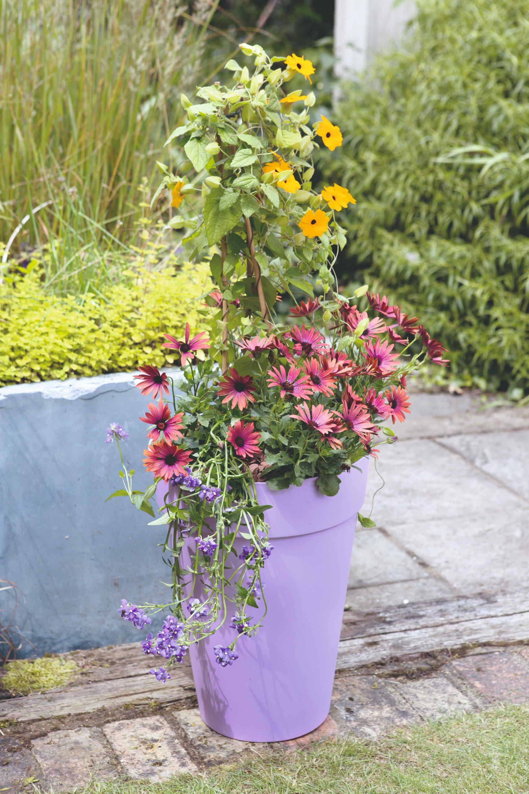 Fialový kvetináč s kvetmi ťahajúcimi sa do výšky