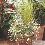 Kvetináč s malými kvetmi a trávami