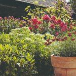 Detail záhrady s veľkým kvetináčom