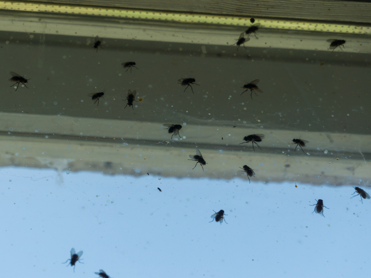 muchy na okne