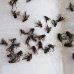 Mŕtve muchy na zemi