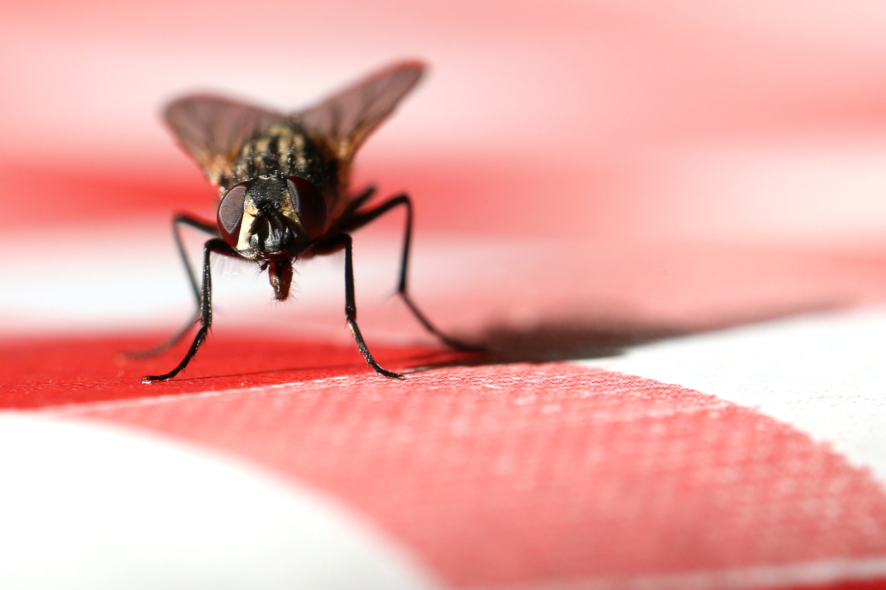 Fly on a kitchen table