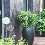 Vysoké betónové nádoby so zeleňou