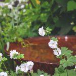 Kvety v záhone pred hrdzavou misou