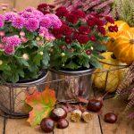 Jesenná dekorácia v kvetináčoch s tekvicami a gaštanmi