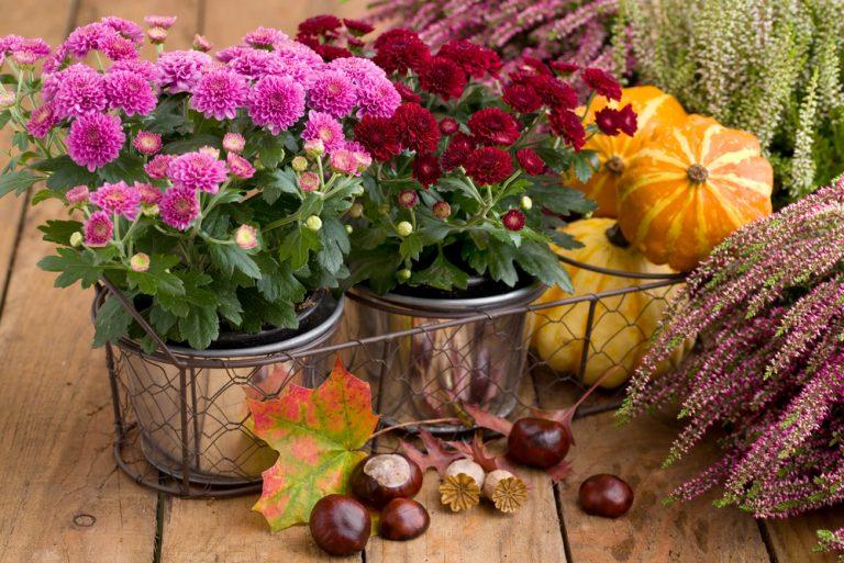 Dôkladná príprava počas jesene, je zárukou krásy a bohatej úrody na vašej záhrade