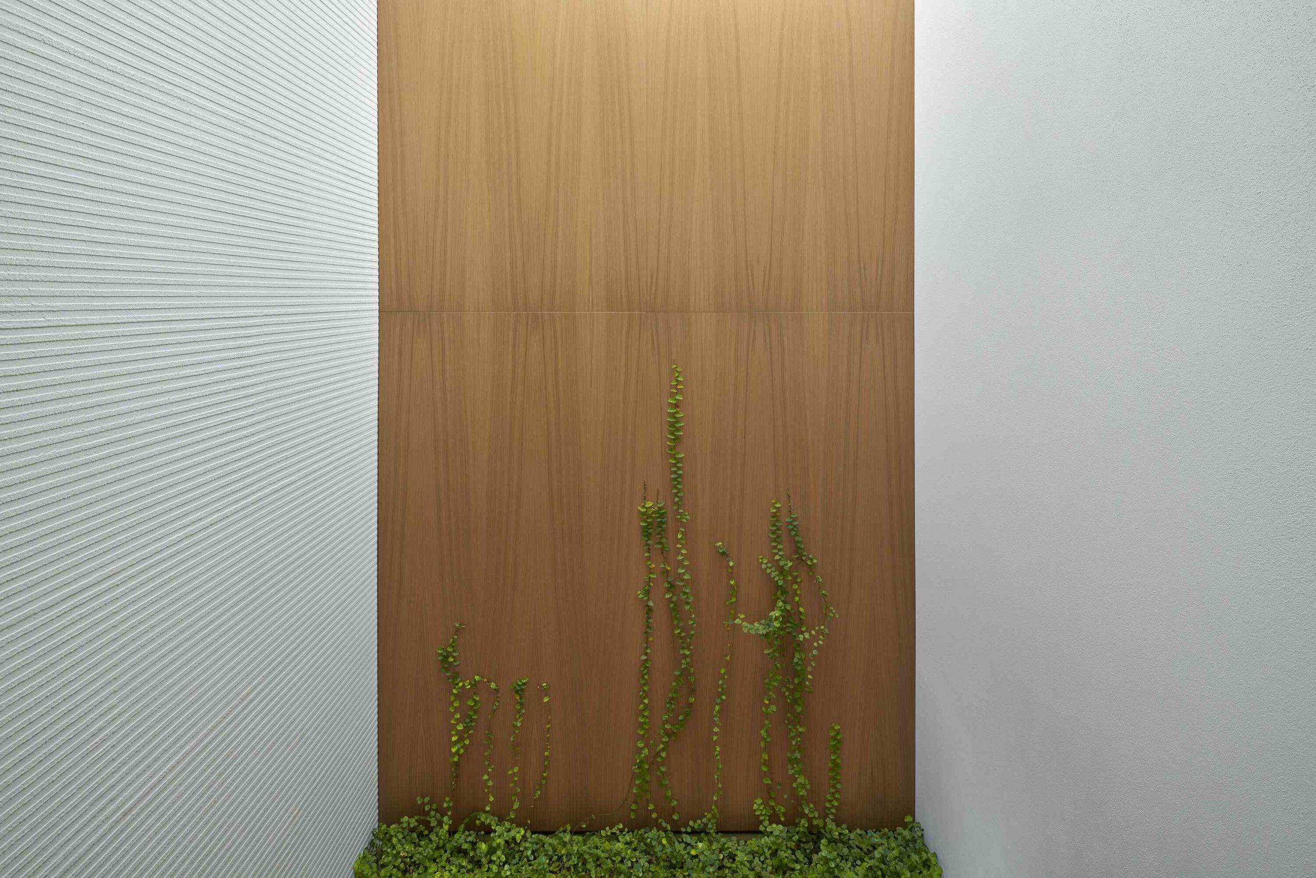 Drevená stena s ťahavou rastlinou