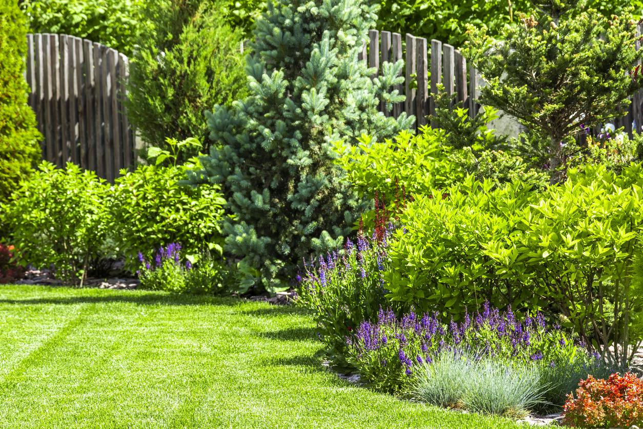 Zelená záhrada s rôznymi rastlinami