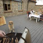 Grilovanie na terase a dívajúci sa pes