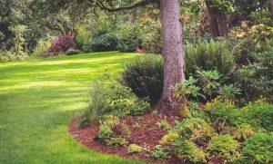 Aké rastliny budú úspešne rásť aj na plochách pod stromami a zároveň vás potešia príťažlivým vzhľadom